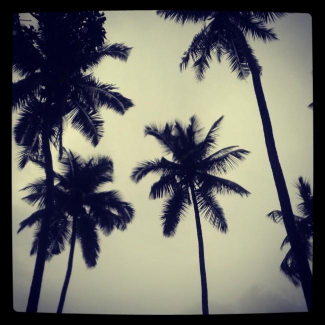 Goa, Beaches, India, Travel, Rain, Coconut Trees, Anjuna, Candolim, Palolem