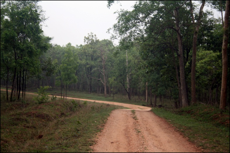 jungle, Pench