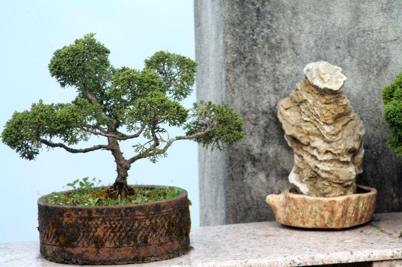 Little bonsai trees dotting the garden