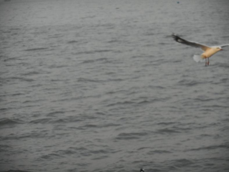 Feet on the map, Seagulls, Murud, Golden Swan Beach Resort