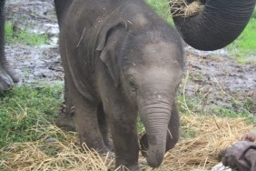 Coorg, Dubare Elephant Camp